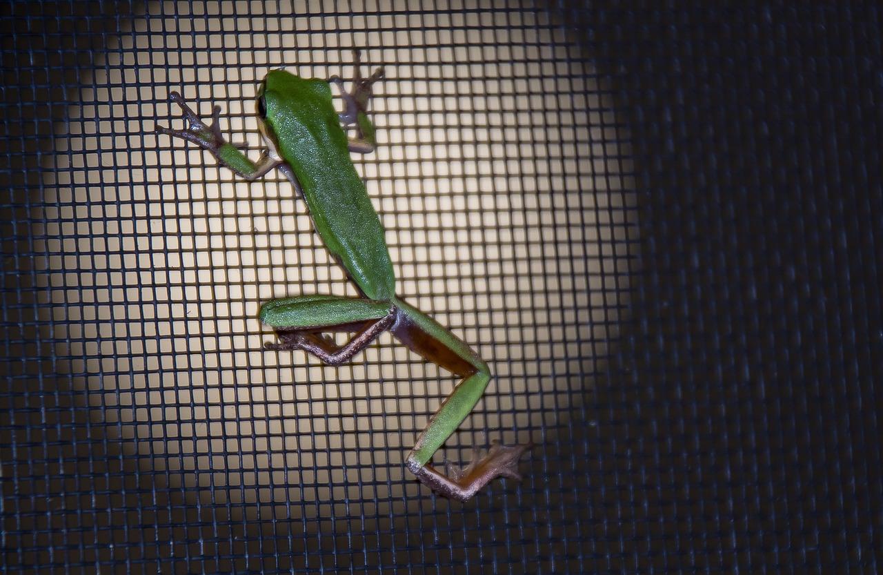 frog-2099914_1280